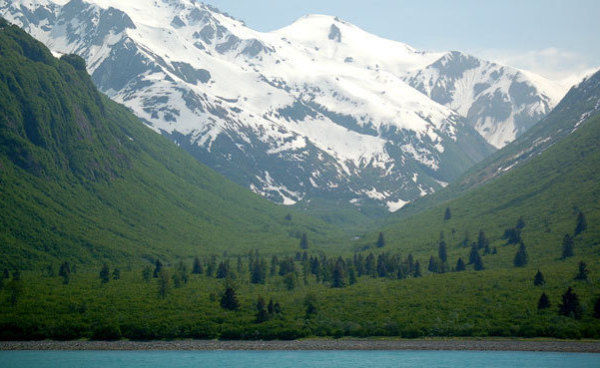 R-TONGASS-FOREST-large