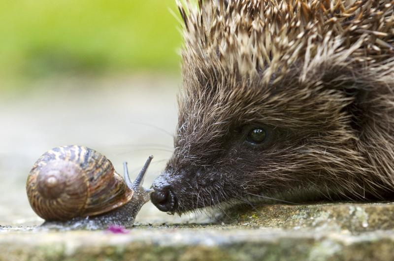 Face to face with a hog! by Paul Hobson