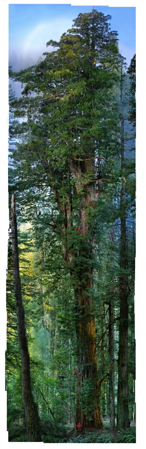 Tree-600x1839