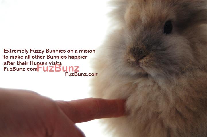 FuzBunz Website